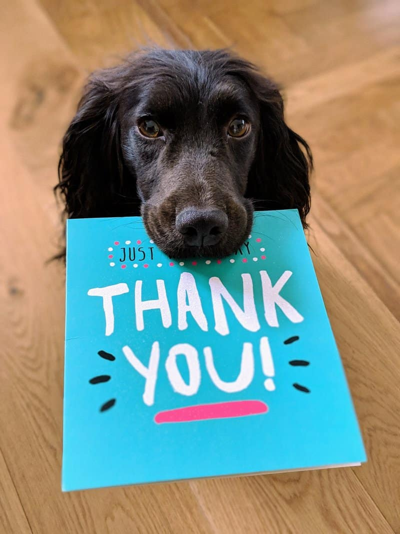 Tilly saying thank you