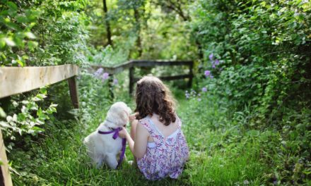 Animal-Assisted Therapy FOr Child Sexual Abuse:  A SSWN Research Brief