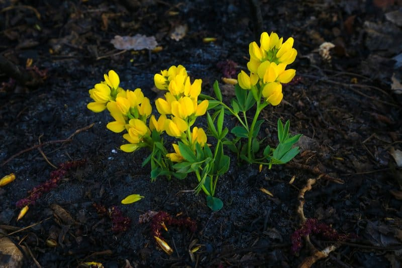 Flowers emerging after fire
